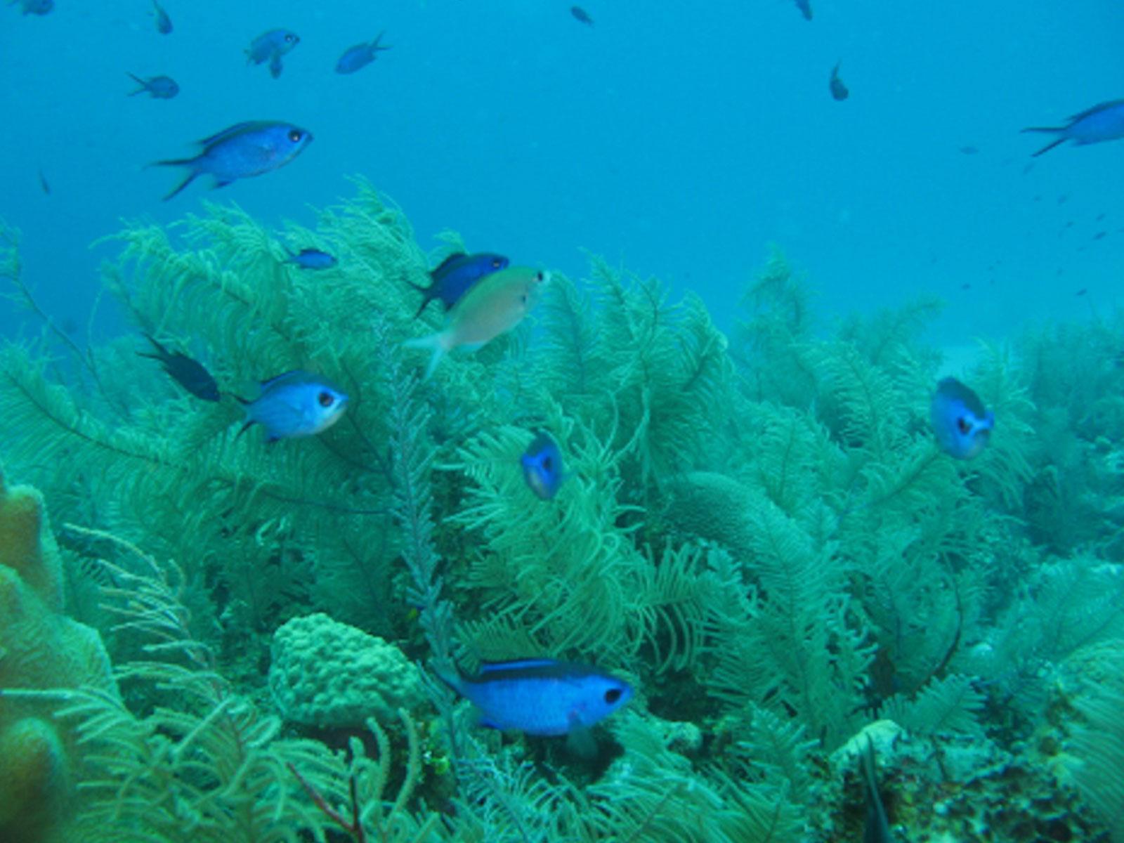 Reserva Seaflower 043 - OPMRP