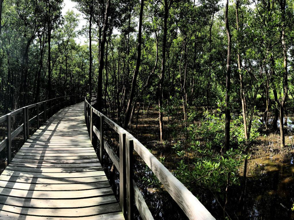 Pasarela y manglares - OPMRP